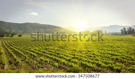 Sunset at a vineyard in Chile, sunrise at a vineyard wine vineyard wine vineyard wine vineyard wine vineyard wine vineyard wine vineyard wine wine wine in Chile beautiful vineyard in center of Chile