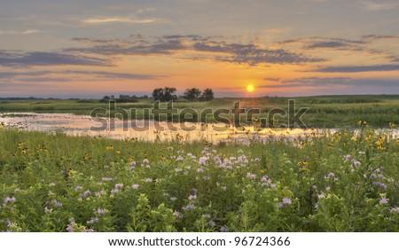 Sunset at Flower Field Sunset at wild flower field in Illinois. - stock photo