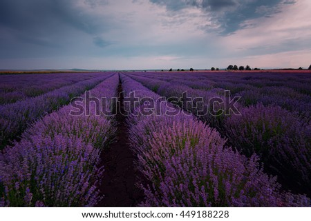 Sunset at lavender field, near Burgas city, Bulgaria - stock photo