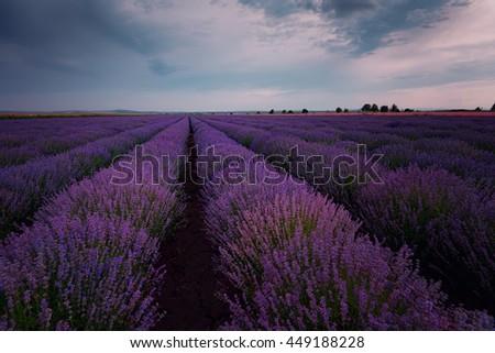 Sunset at lavender field, near Burgas city, Bulgaria - stock photo