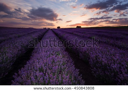 Sunset at lavender field near Burgas city, Bulgaria - stock photo