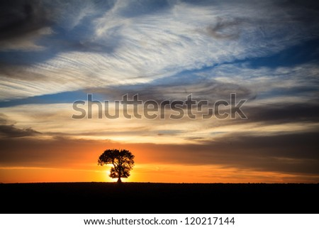 Sunset at lone tree - stock photo