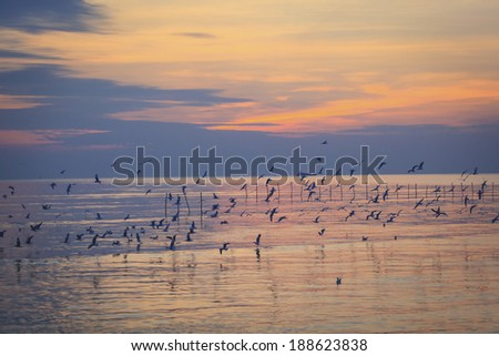 sunset at sea many seagull flying - stock photo