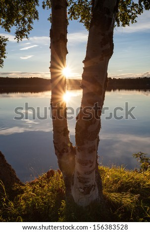 sunset at swedish lake with birch tree