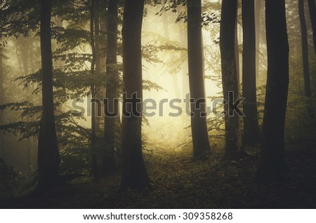 sunset at the edge of forest in autumn - stock photo
