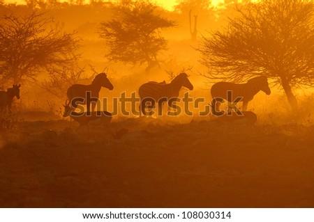 Sunset at the Okaukeujo waterhole, Namibia - stock photo