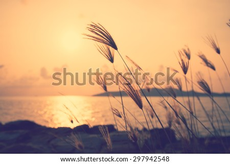 Sunset at the seaside with grass in the foreground .Image has a vintage effect applied. - stock photo