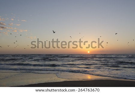 Sunset at the shoreline with birds flying away