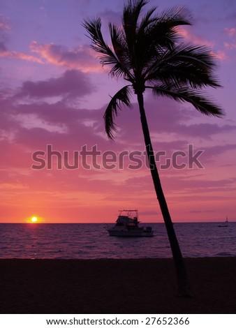 Sunset at Waikoloa and palm tree - stock photo