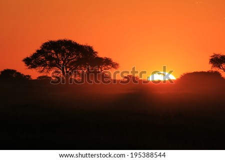 Sunset Background from Africa - Golden Nature and her Beautiful Colors - stock photo