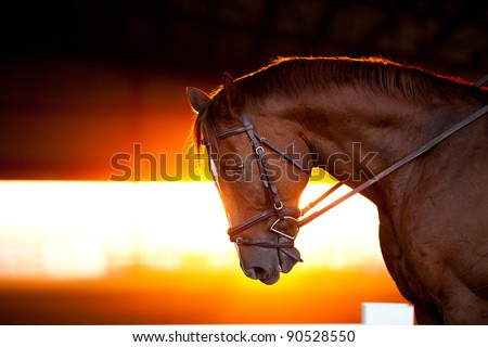 Sunset backlit portrait of a horse in an arena - stock photo