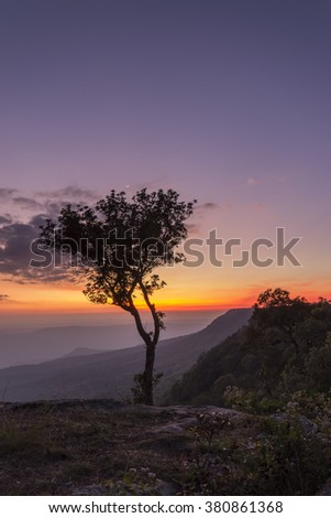 Sunset beautiful one tree view twilight color at Phu Kradueng National Park Loei Thailand