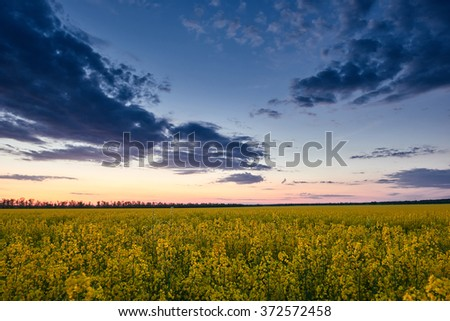 Sunset. Beautiful spring landscape, yellow flower in rapeseed field  - stock photo