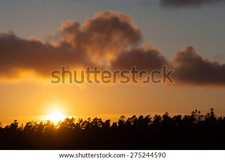 Sunset behind a row of silhouetted trees, Oregon, USA. - stock photo