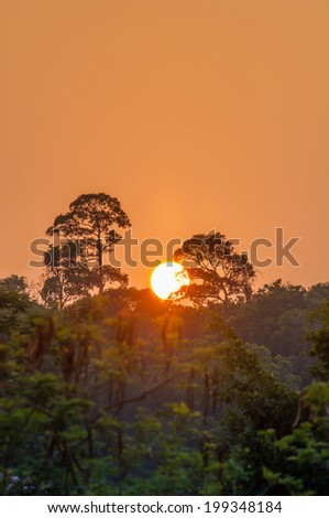 Sunset behind the big tree on evergreen forest - stock photo