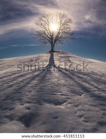 Sunset behind the lonely Tree on the Top of the Hill