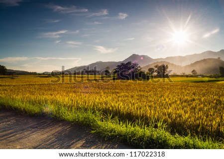 Sunset behind the mountains in the rice field with lens flare effect - stock photo