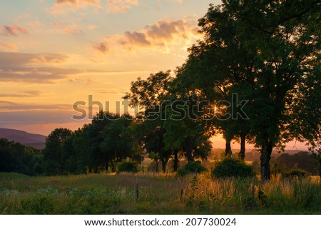Sunset behind tree alley - stock photo