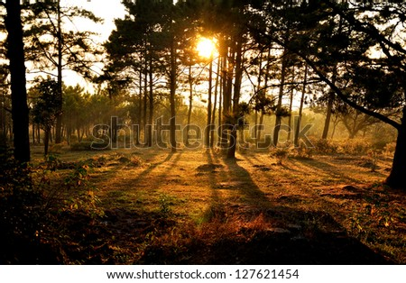 sunset behind tree in the forest - stock photo
