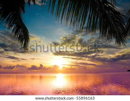 Sunset between Palms - stock photo
