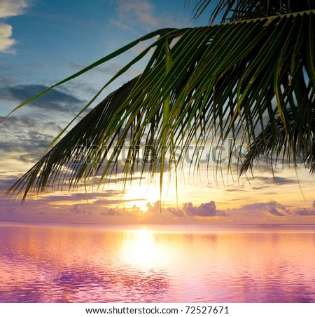 Sunset Branch Outdoor - stock photo
