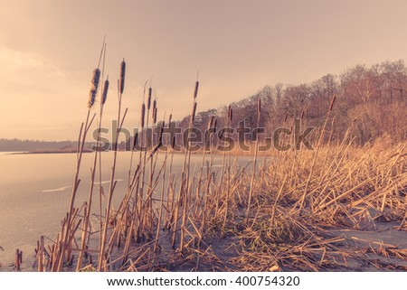 Sunset by a frozen lake with reeds - stock photo