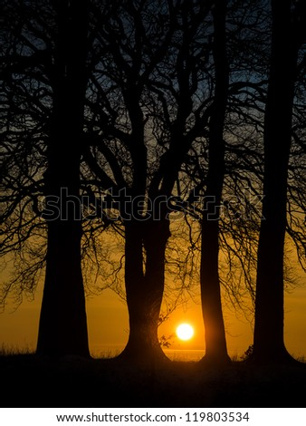 Sunset captured through the tree silhouettes on top of Wittenham Clumps in Oxfordshire - stock photo