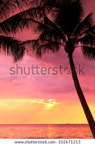 Sunset Divine Coconut Horizon
