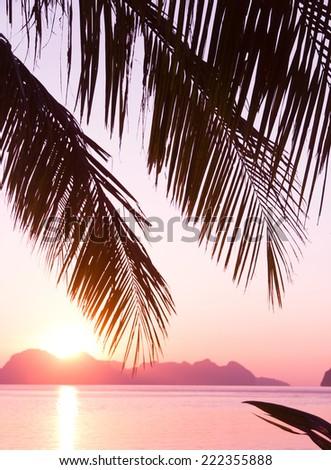 Sunset Divine Palm Paradise  - stock photo
