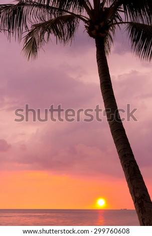 Sunset Divine Tree Silhouettes  - stock photo