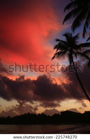 sunset drama on the sea , Idyllic Wallpaper Fiery Backdrop  , Tree Silhouettes Fiery Backdrop , Night is Coming Bay View , morning vivid colors on caribbean beach - stock photo