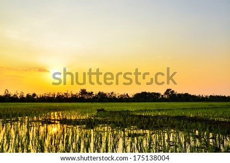 Sunset field - stock photo