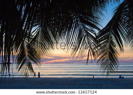 sunset foliage at Patong beach, Phuket, Thailand - stock photo