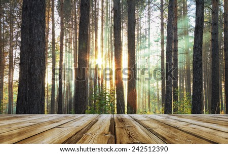 sunset forest and wooden floor  - stock photo