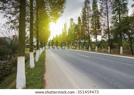 Sunset forest roads