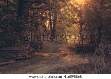 Sunset forest scene - stock photo