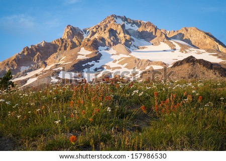 Sunset glow on wildflowers and Mt. hood, Oregon - stock photo