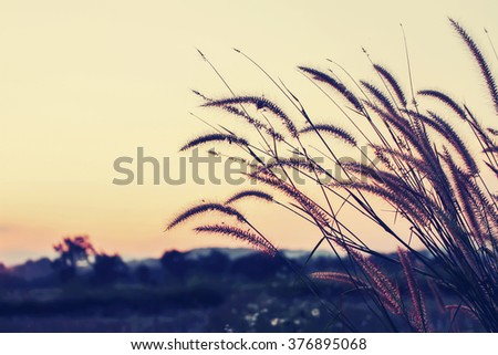 sunset grass flower in nature over  background, vintage design [Blur and Select focus]