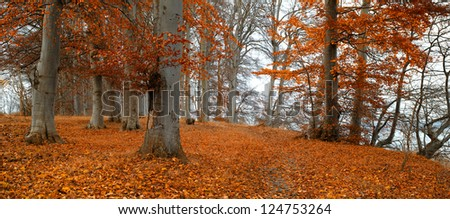 Sunset in autumn forest - a saturated forest in the fall - stock photo