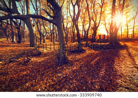 Sunset in autumn forest.  Beautiful nature background - stock photo