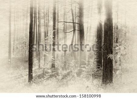 Sunset in autumn forest, retro illustration - stock photo