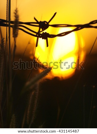 Sunset in barbed wire