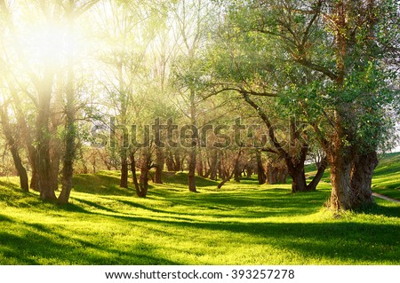 Sunset in forest, sunlight with tree shadows on glade - stock photo