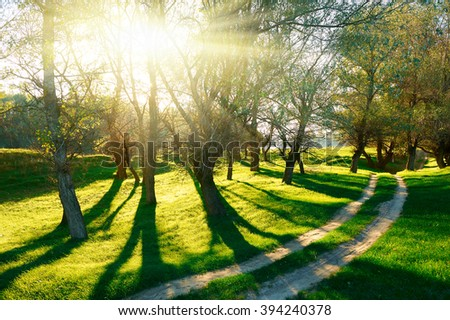 Sunset in forest, sunlight with tree shadows on glade. Ground road - stock photo