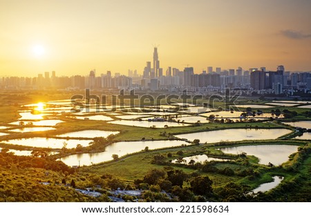 sunset in hong kong countryside, rice field and modern office buildings  - stock photo