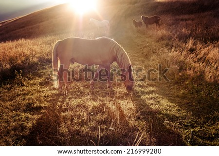 Sunset in mountains nature background. Horses silhouette at haze and sunbeams on summer meadow. Image in vintage retro hipster style - stock photo