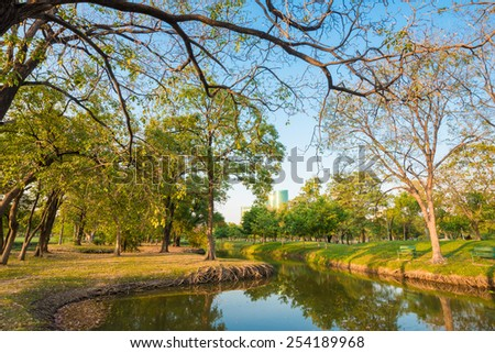 Sunset in park with trees and sawamp, green grass - stock photo