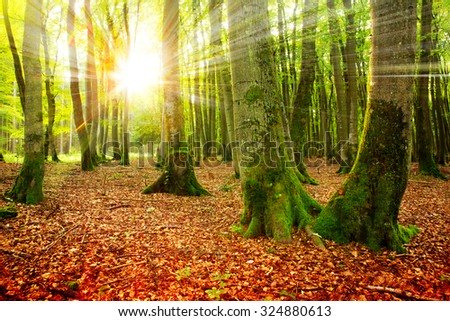Sunset in the autumn forest. Autumn landscape .