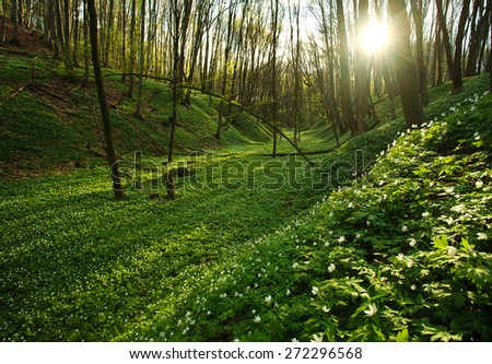 Sunset in the blossoming green forest in sunlight and shadows, spring nature background - stock photo