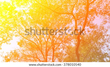 sunset in the forest, retro film filtered color technic style - stock photo